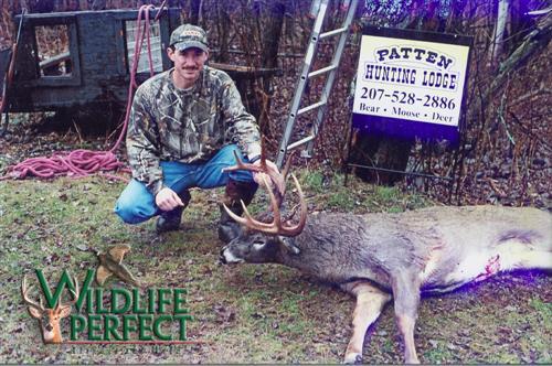 Best Seed For Deer Food Plot In Maine