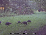 WP Grazing Mix Game Cam